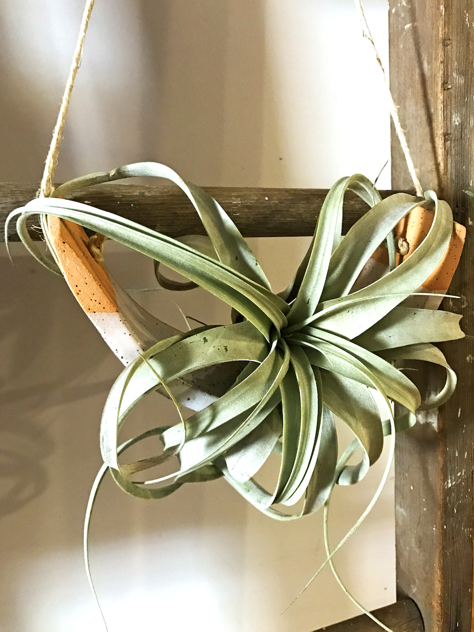 air plant young blood boutique styleblueprint atlanta