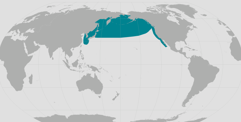 North Pacific right whale range map