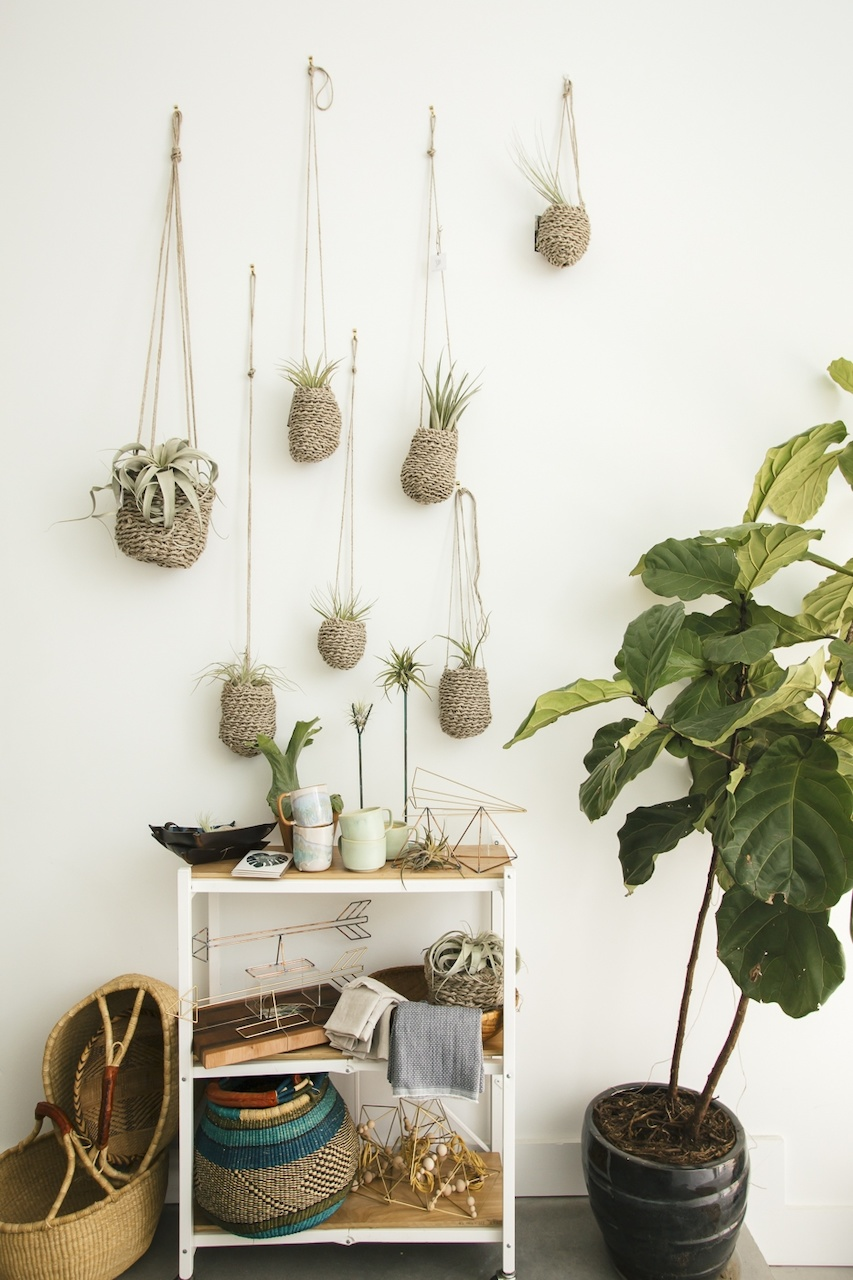 Baskets of hanging succulents adorn the walls of the store.