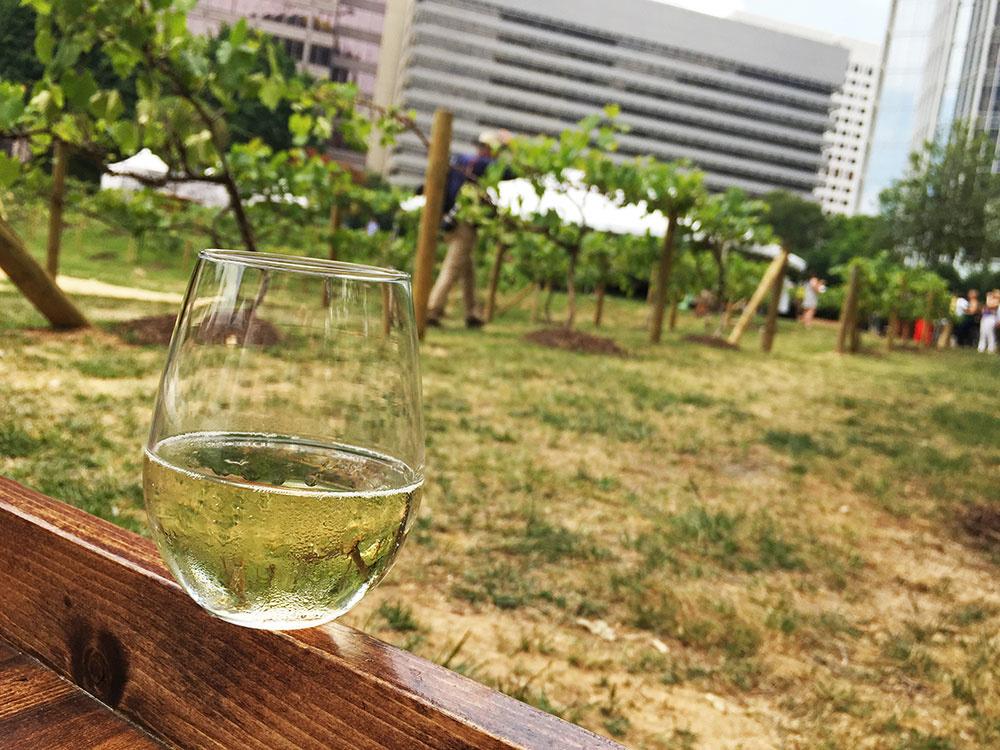sb-se-afwf-vineyard-wineglass.jpg