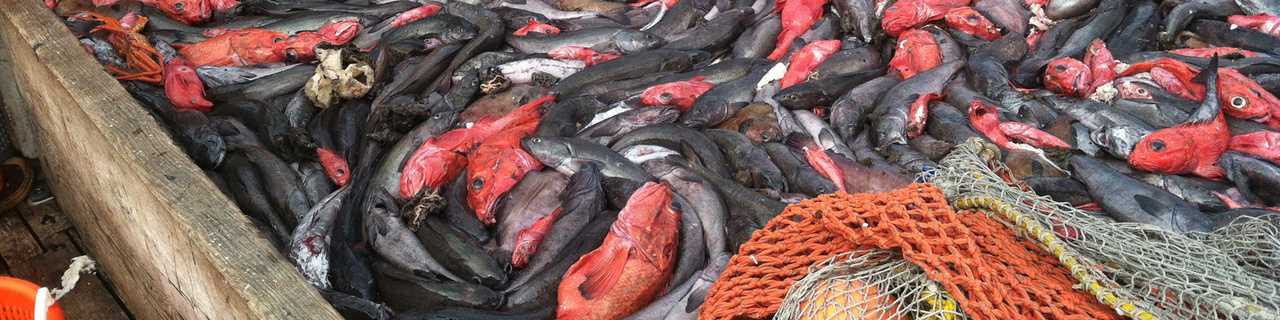 Fish bycatch aboard a fishing vessel