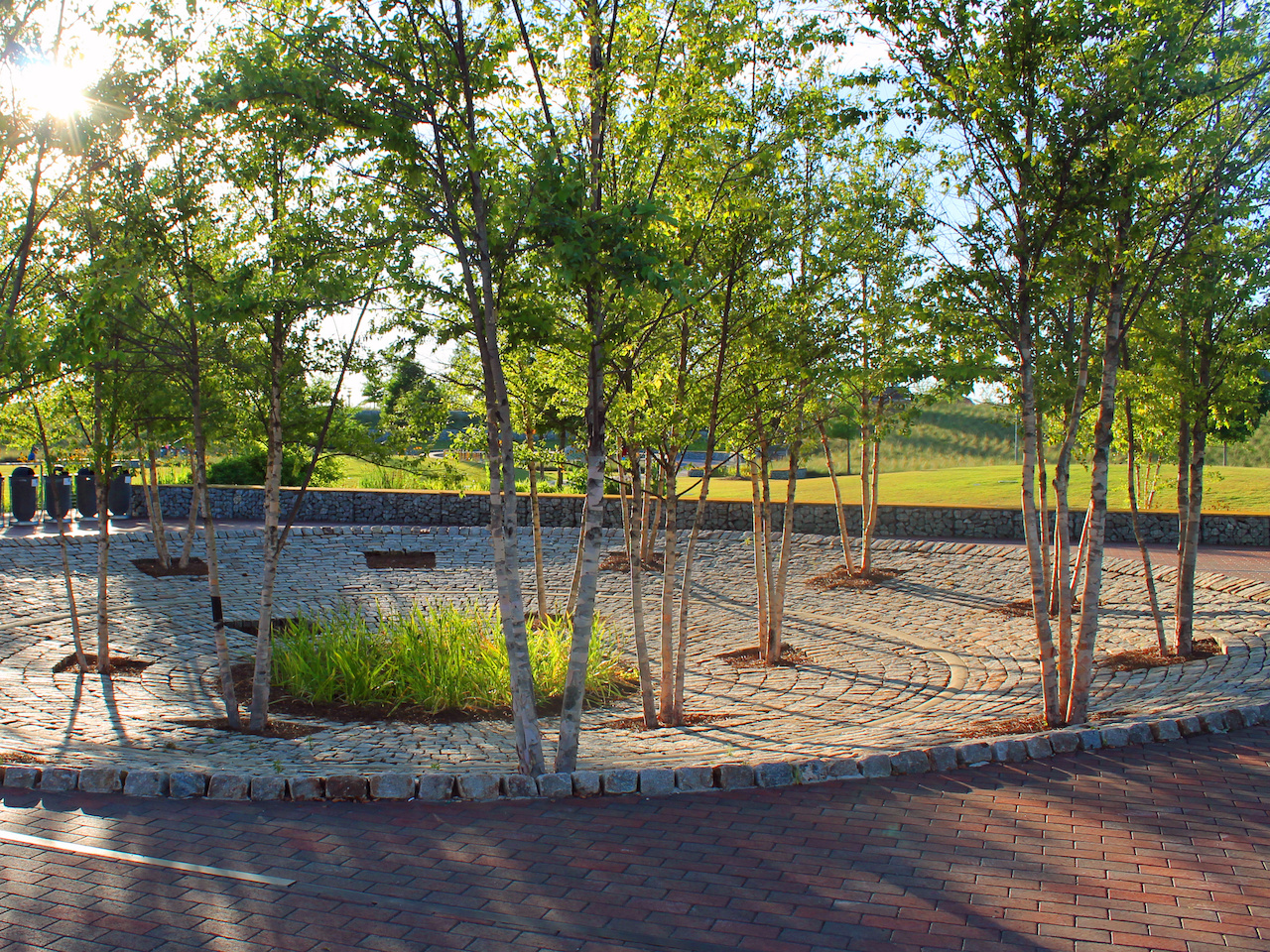 The sunlight filters through vibrant green leaves at Railroad Park
