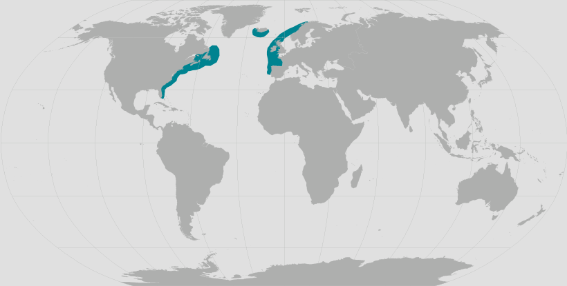 North Atlantic Right Whale range map.