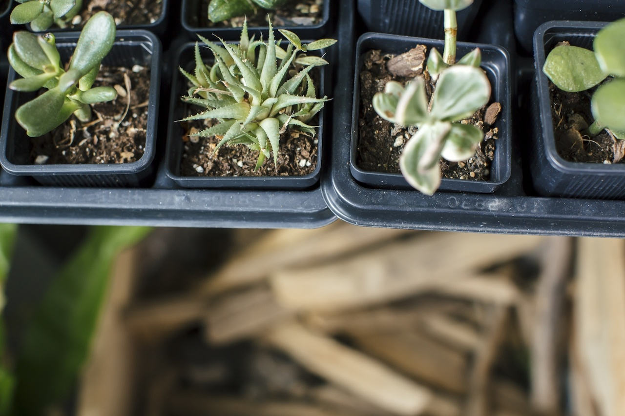Pick a succulent, any succulent.