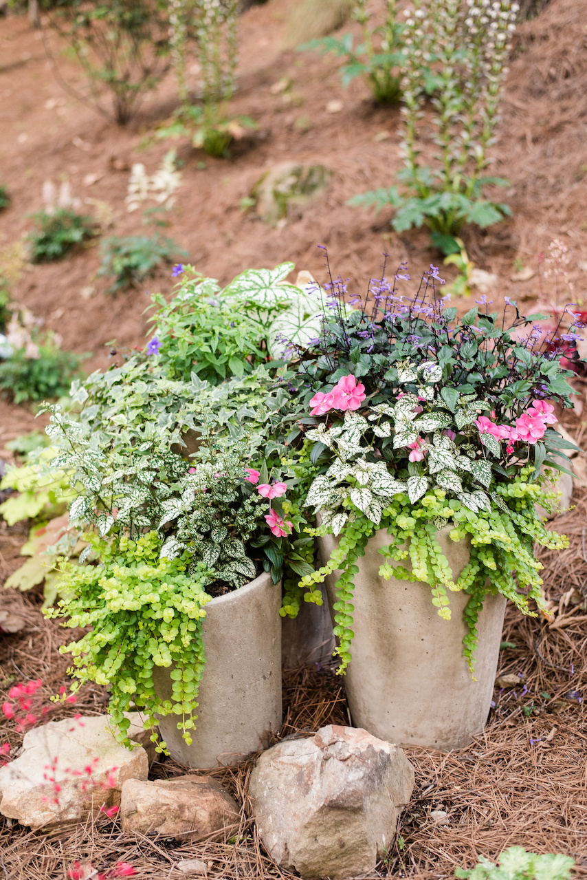 Pots along the walkway are filled with Mona lavender, creeping jenny, new guinea impatiens and hypostestes.
