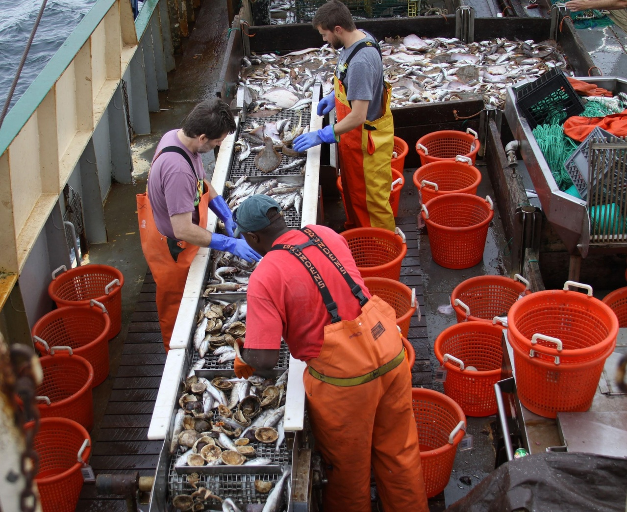 crew sorting fish on ship