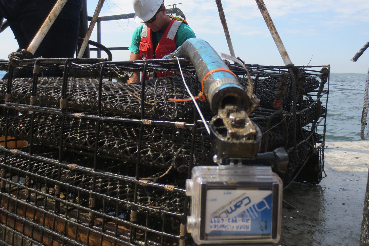 GoPro camera attached to oyster cage.