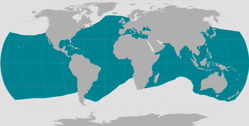 Map showing where bottlenose dolphins are found throughout the world.