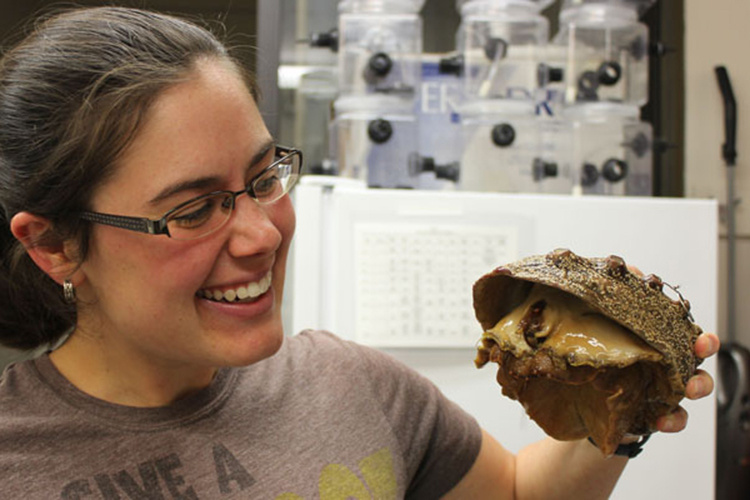 Kristin Aquilino and a white abalone at the UC Davis Bodega Marine Lab.