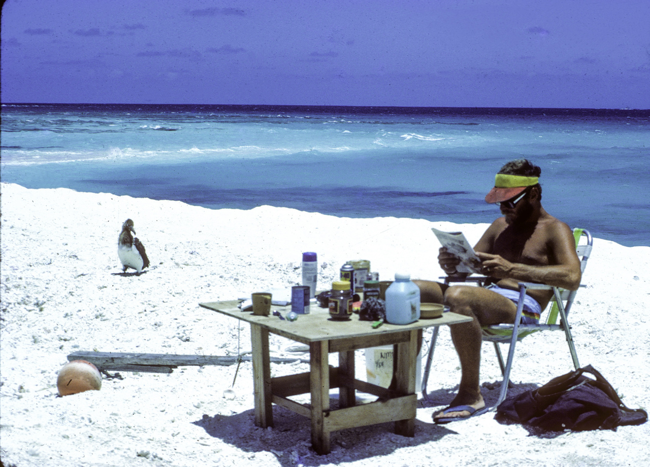 Albatross and researcher at desk on beach with ocean in background.