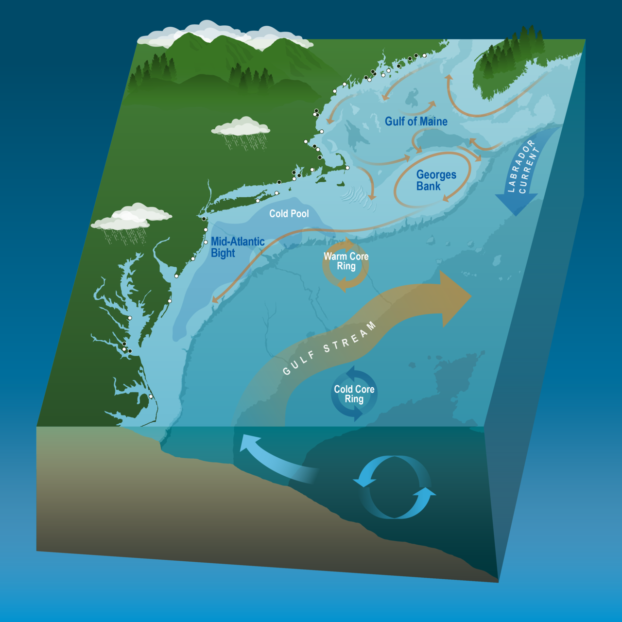 A map of the Northeast U.S. Continental Shelf ecosystem showing the Gulf of Maine in the north, Georges Bank east of Cape Cod, and Mid-Atlantic Bight in the south. The image includes the Gulf Stream and Labrador Current, examples of warm and cold rings, and the cold pool in the Mid-Atlantic Bight region.