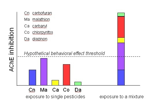 This graph shows the hypothetical difference between the effects of an individual pesticide and pesticide mixtures on salmon bra