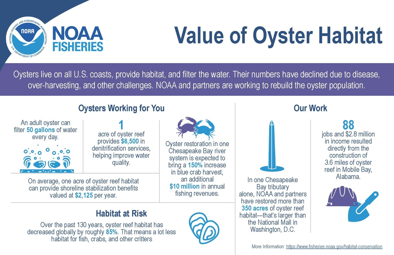 Infographic National Value of Oyster Habitat.jpg