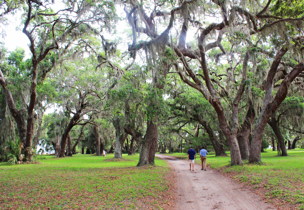 To get to the main house, guests meander through groves of live oak trees, known for their massive size and Spanish moss hanging from branches.