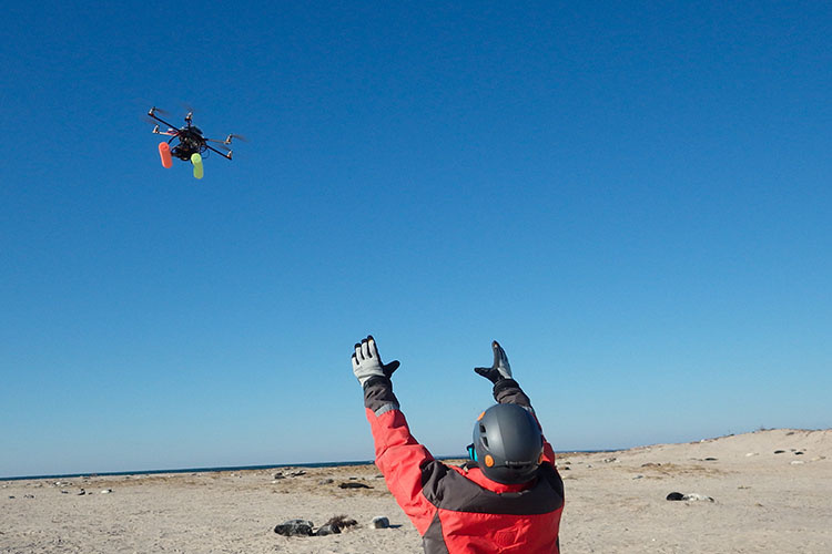 researcher releasing drone above seals on beach