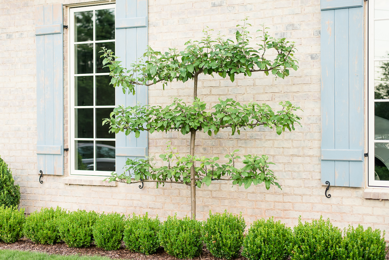 The front of the house features three espalier apple trees, which are dripping with fresh apples in the summer.
