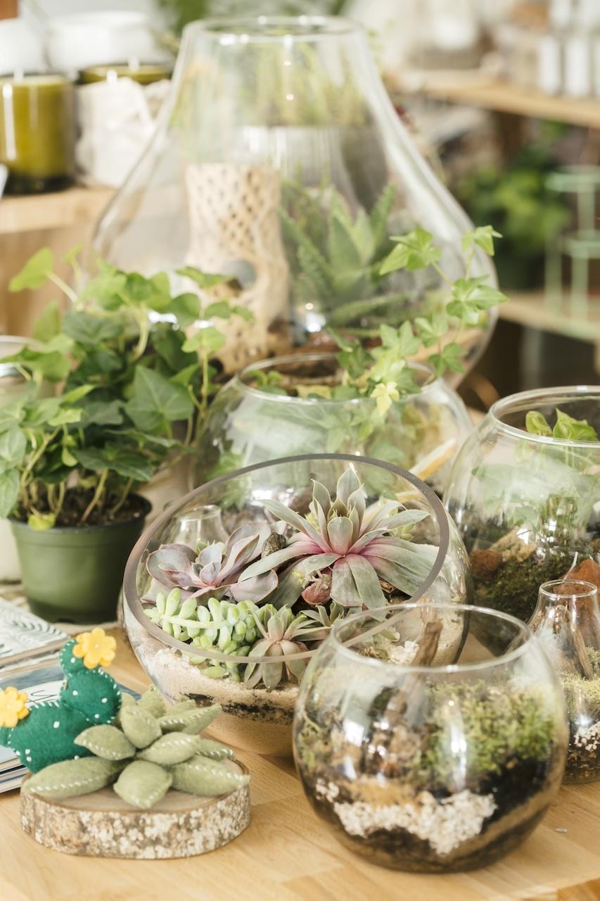 A few of the succulent and terrarium displays at The ZEN Succulent
