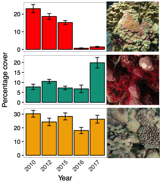 Graphs of percent voer of hard corals, macroalgae, and crustose coralline algae, by year, at Jarvis island.