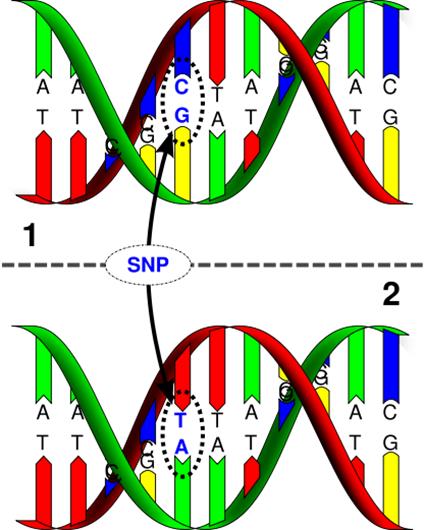 SkatesGeneticStructure_SNPs.png