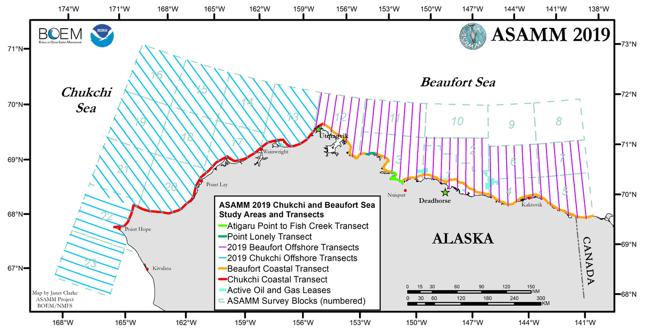 ASAMM 2019 Chukchi and Beaufort Sea Study Areas and Transects (map showing grid areas and flight transects).