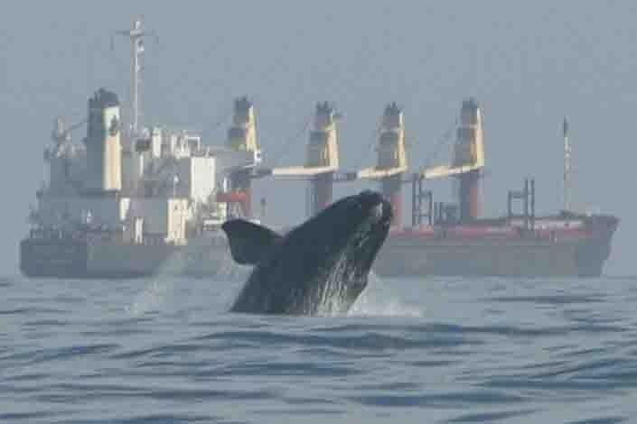 750x500-whale-and-ship.jpg