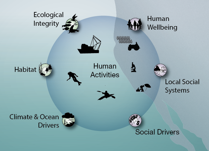Graphic of California Current marine ecosystem