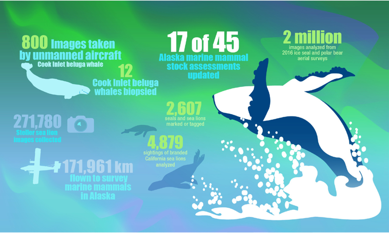 Year in Review Protecting Marine Mammals