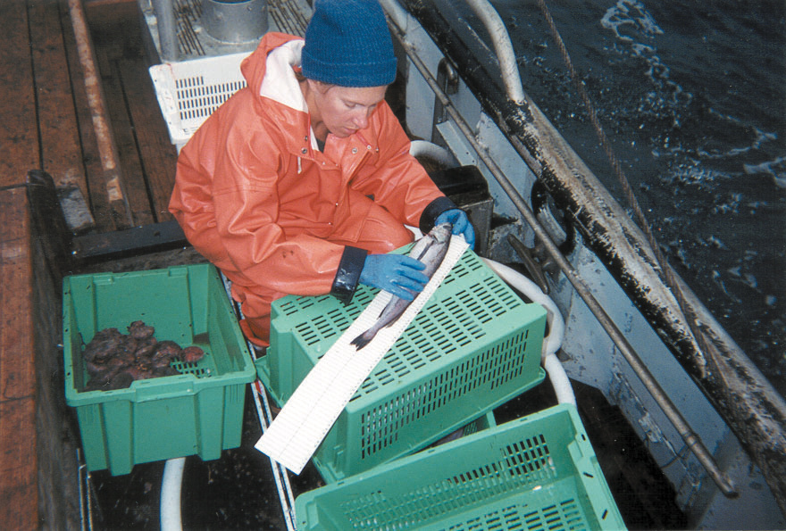 Observer measuring fish length on deck.