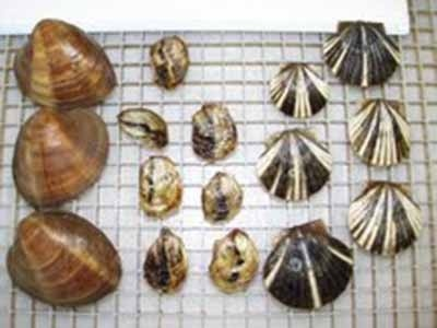 Collection of shells on grid showing variations in shape and size.