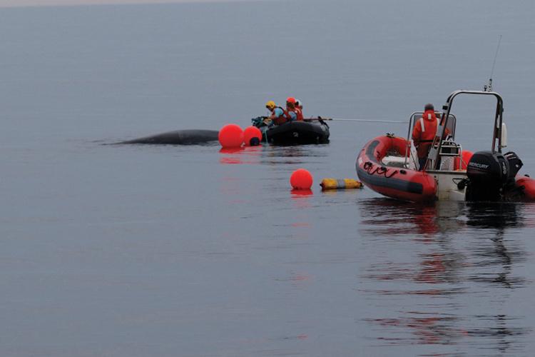 boat and humpback whale.jpg