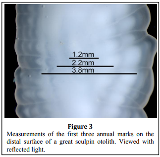 Age and Growth Information, the great sculpin otolith measurments