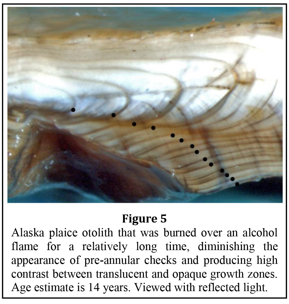 Alaska Plaice Age & Growth Data