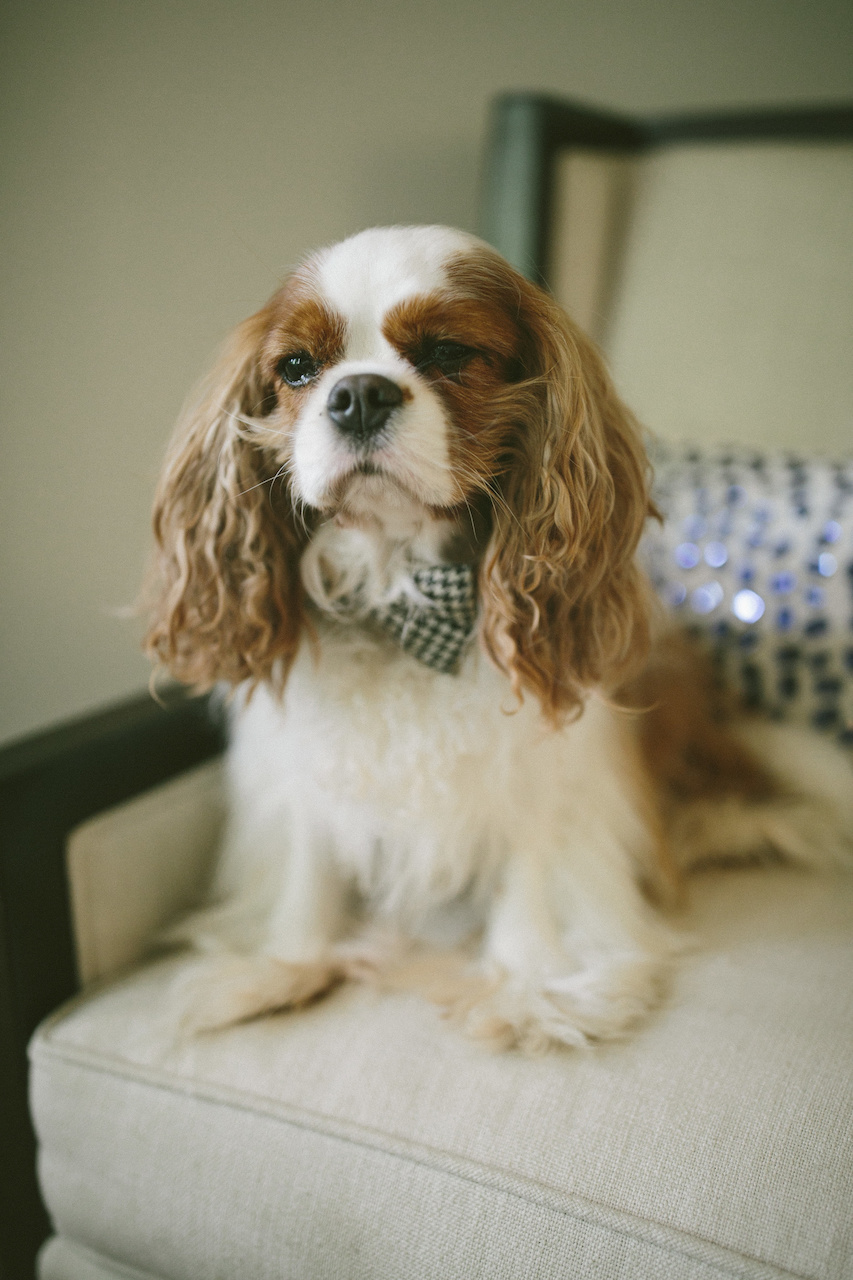 Victor models his bow tie.