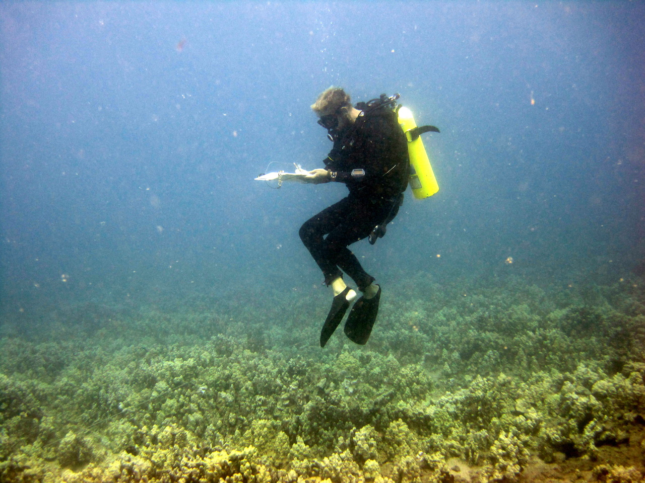 A researcher surveys the coral reef off Maui for the Pacific Reef Assessment and Monitoring Program.