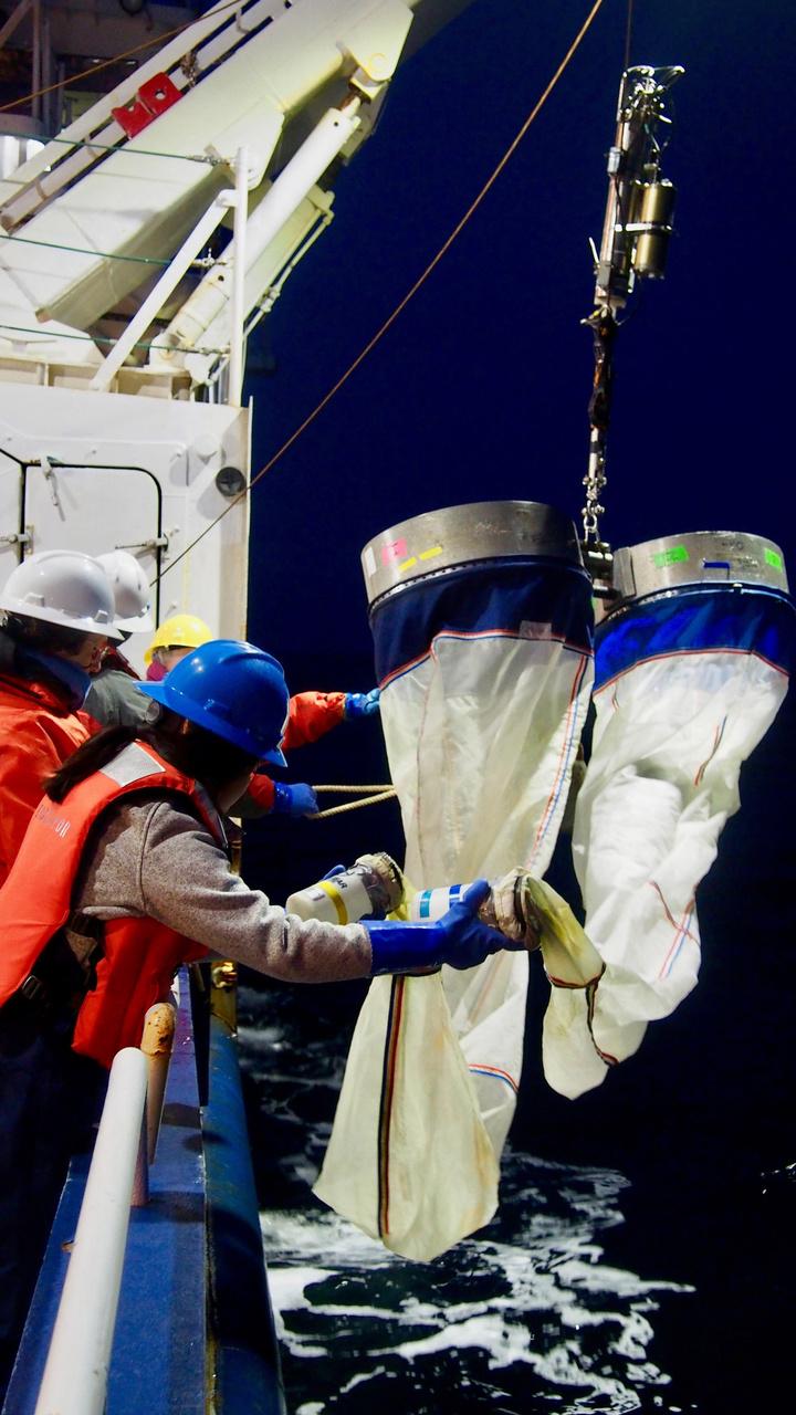 bongo nets collect plankton