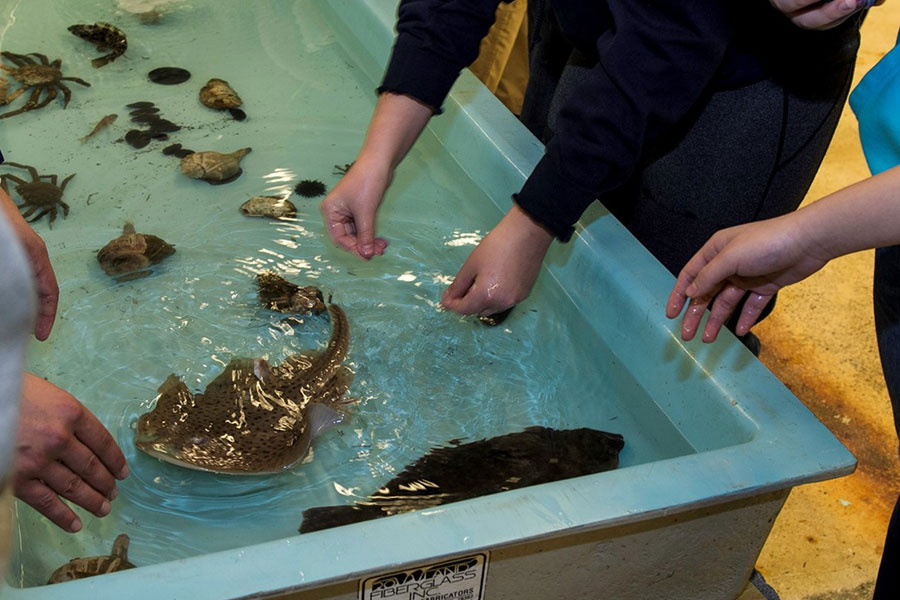 Touch tank with fish and crabs.