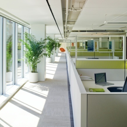 Qmotion commercial shading used in an office with large green plants
