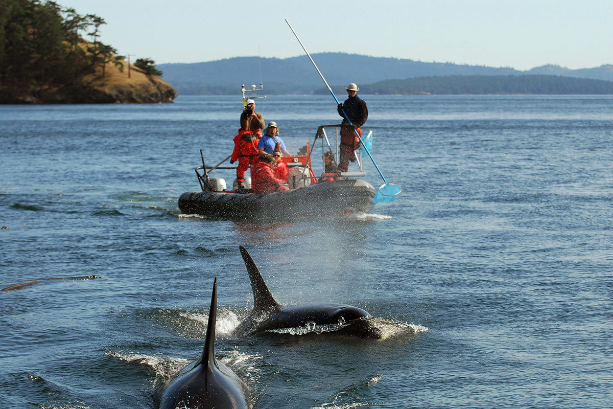 Scientists aboard vessel collecting orca fecal samples
