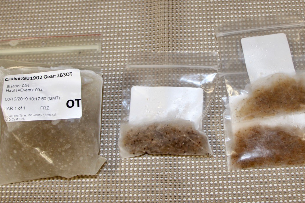 frozen-plankton-walsh-ecomon.jpg