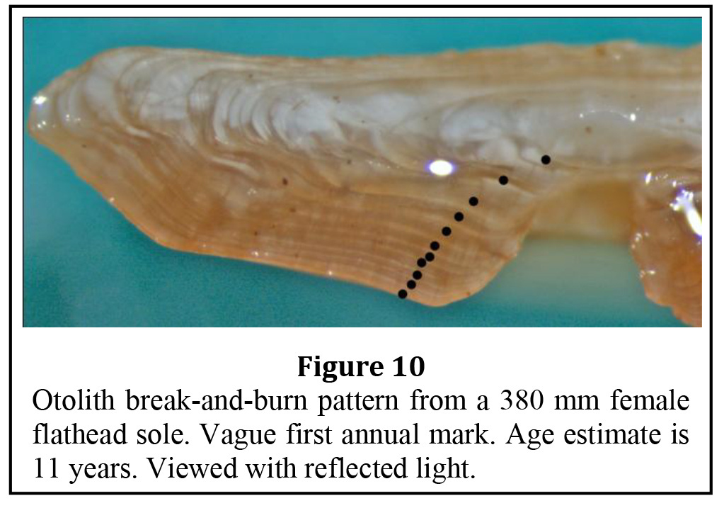 Flathead Sole Age & Growth Data