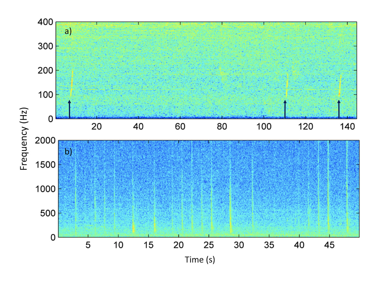 Spectrogram showing North Pacific right whale upcalls (top panel, indicated with arrow), and gunshot calls (bottom panel) from acoustic recordings in Unimak Pass.