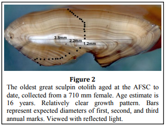 Age and Growth Information, the great sculpin otolith image