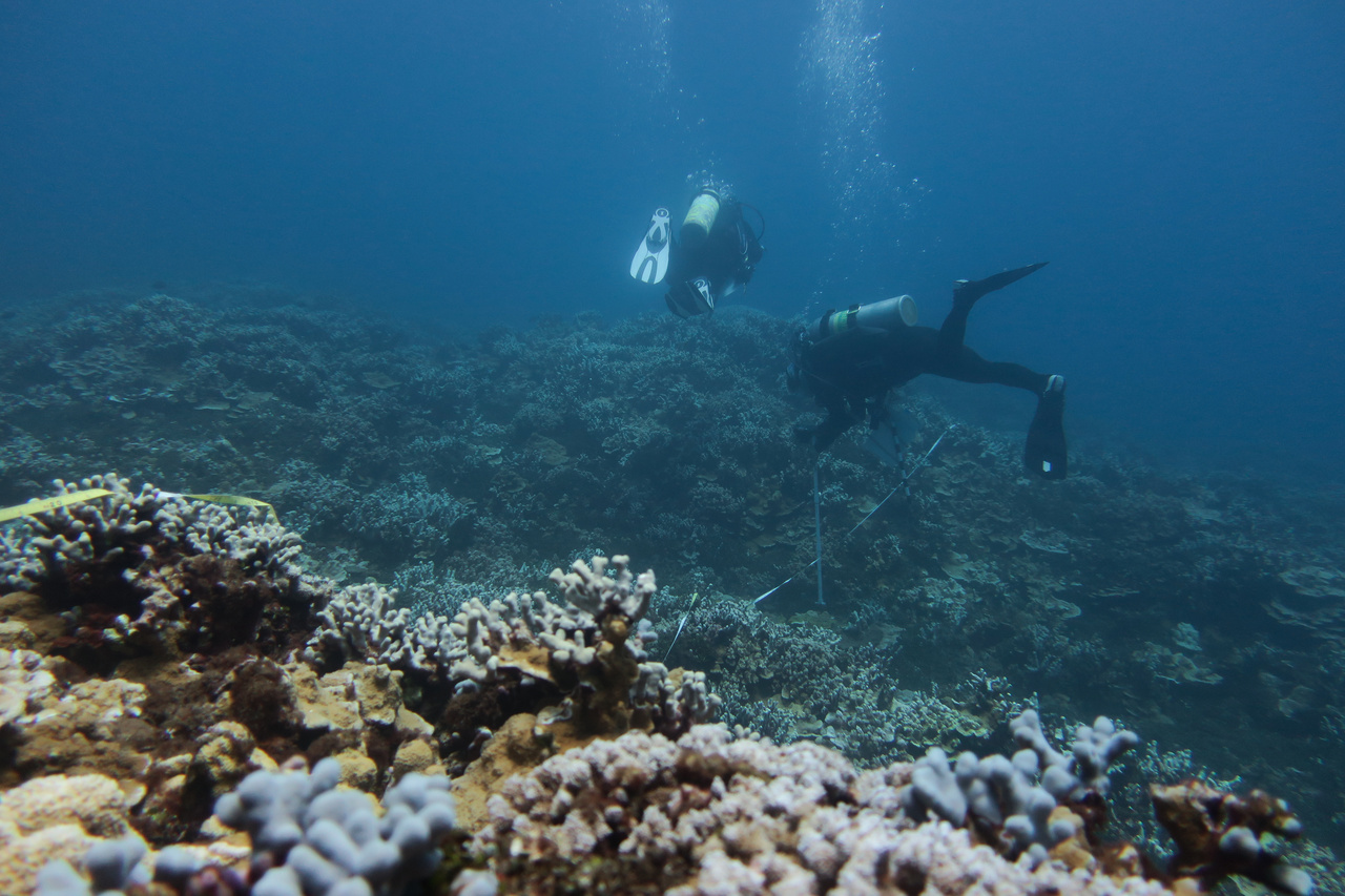The coral team photographs the coral colonies along a transect off of Lānaʻi. Before taking pictues, they measure, identify, and note the health of colonies. This is the first island stop on our way to the island of Hawai'i. Photo: NOAA Fisheries/Courtney Couch