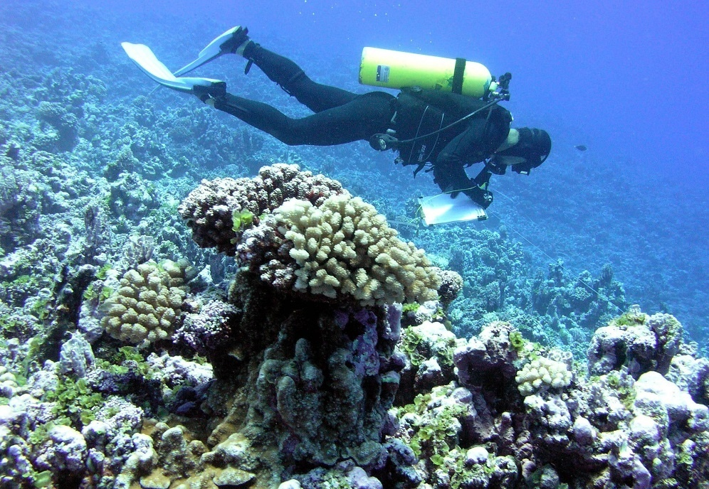 A scuba diver works along a transect line.
