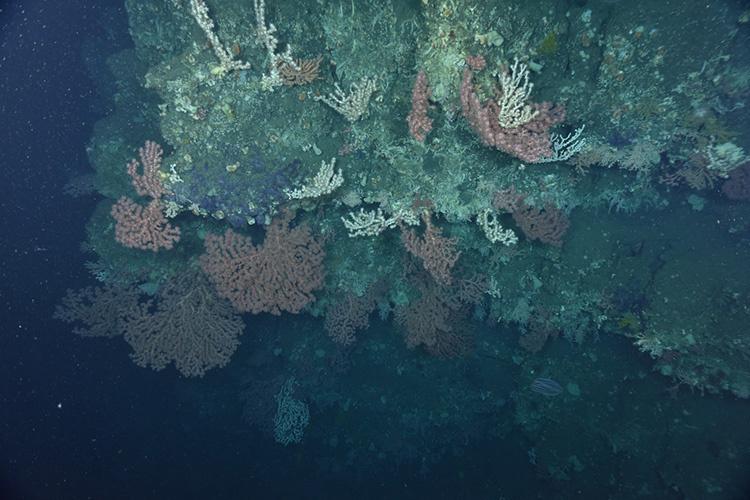 corals-on-overhang-3.jpg
