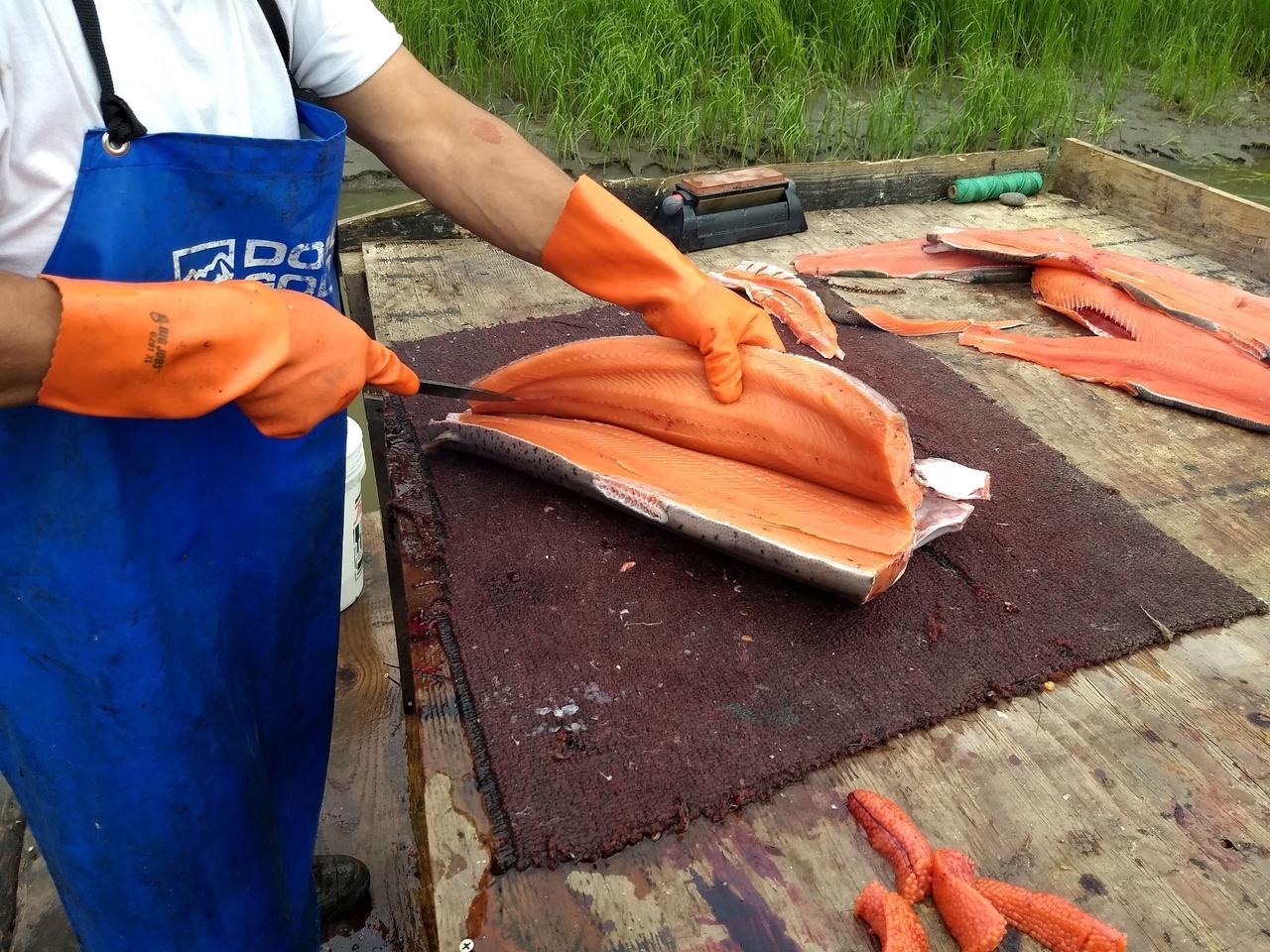 Tribal salmon harvest. Photo: Jennie Franks, NOAA Fisheries