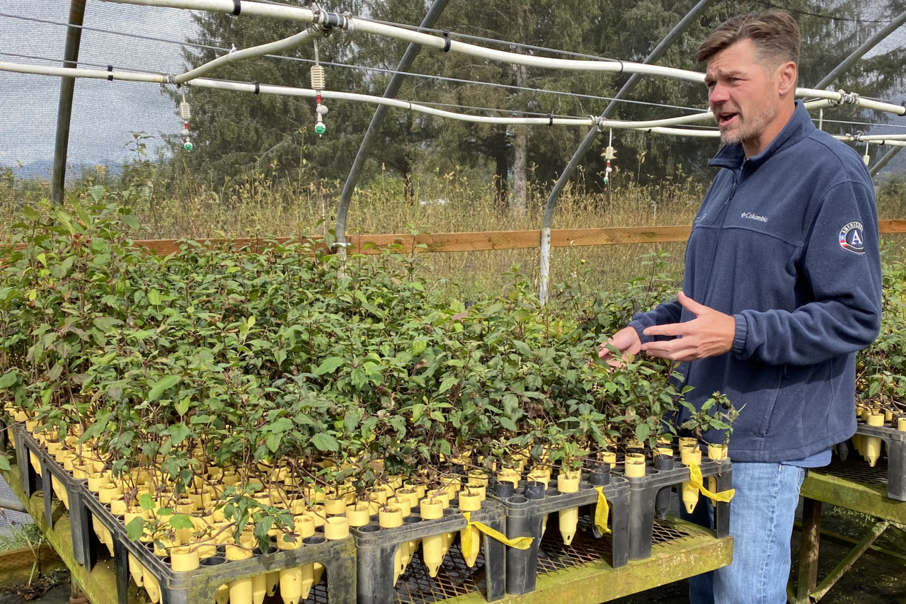 A man stands alongside juvenile plants in a nursery, gesturing with his hands.