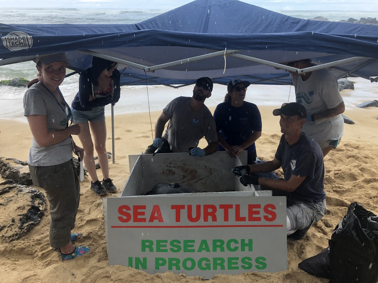 Tent on beach with scientists and turtle underneath.