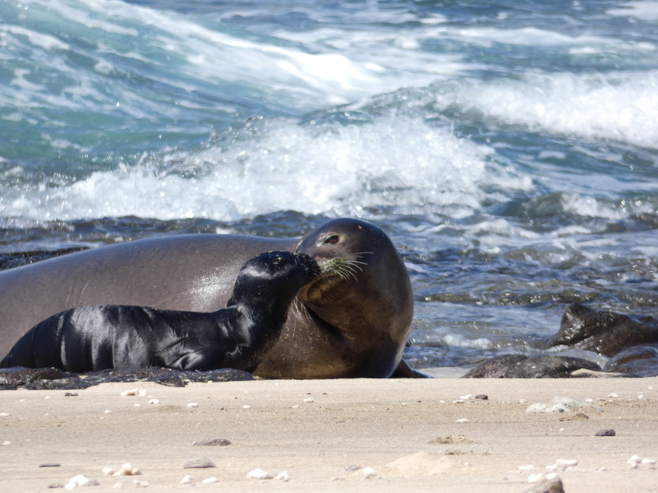 Mother and pup seals on the shore.