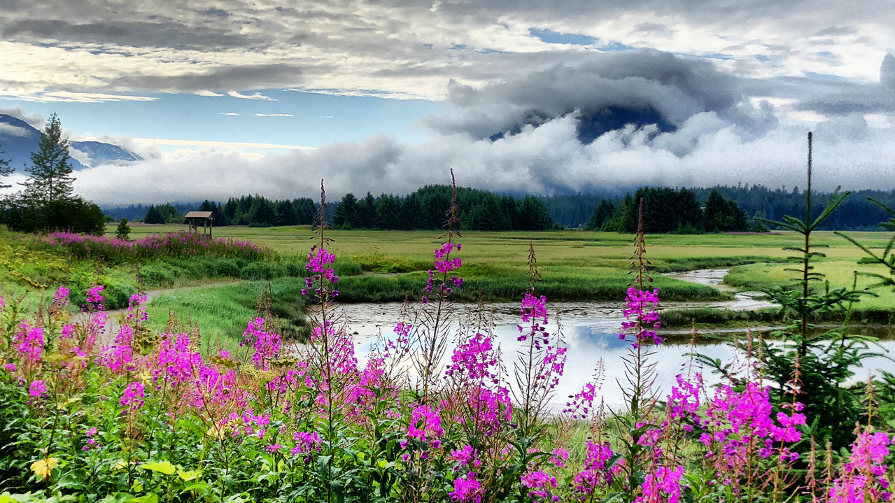 Credit: Richard Yamada. Wetland in Juneau Alaska